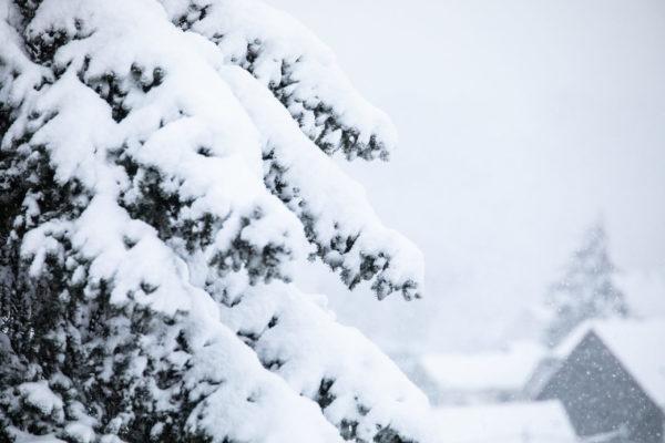Winter2020-1