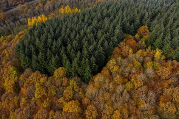Andreas_Heu_Fotografie_Webdesign_Ruschberg_Drohne_0006